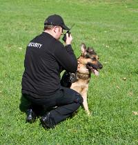 hundefuehrer-diensthunde-sprengstoffhunde-sprengstoffspuehrhunde-wachdienst-sicherheitsdienst-security-schutzhunde-hamburg-vdb-nord-sicherheitsmanagement-objektschutz-wachhunde-objektbewachung-objektbetreuung